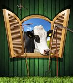 image of cow head  - Wooden wall with old farm tools and an open window with a head of cow - JPG