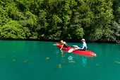 foto of jellyfish  - Family of mother and son paddling on kayak in ocean among jellyfish during summer vacation - JPG