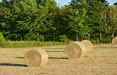 pic of hay bale  - Hay bales on the farm on sunny afternoon - JPG