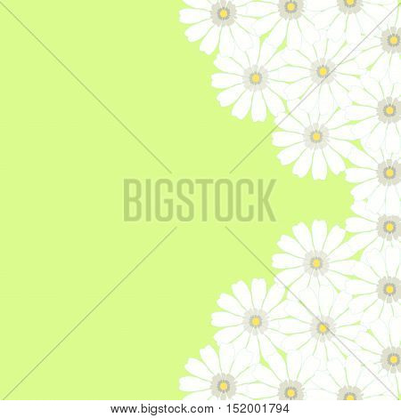 Greeting Card With Camomile On A Green Background. Vector Illustration