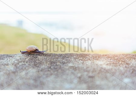 Snails sliding on the concrete wall in morning.
