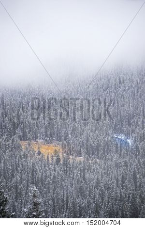 Yellow field and blue river in the snowy, foggy trees from afar