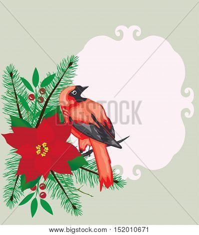 vector illustration of Christmas card with poinsettia flower fir tree branches red bird frame with space for text