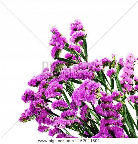 Bouquet from purple statice flowers arrangement centerpiece isolated on white background.