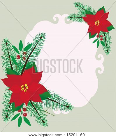 vector illustration of Christmas card with poinsettia flower fir tree branches frame for text