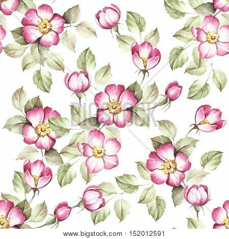 Seamless pattern with rosehip. Hand draw watercolor illustration.