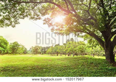 tree large and sunlight in nature meadow