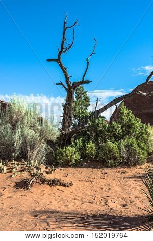 Dead tree in Arches National Park,  Utah