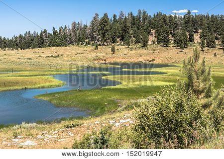Creek, fields and forest around Duck Creek, Utah