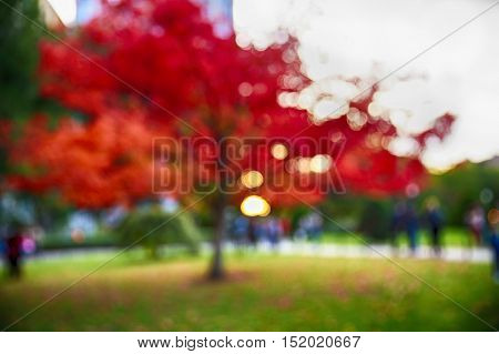 blurred background in autumn city park. blurred red maple and the people in twilight