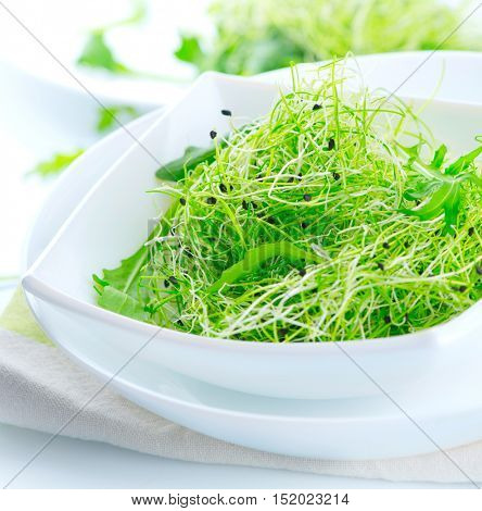Micro greens. Microgreens. Healthy Green Salad. Little Sprouts. Diet