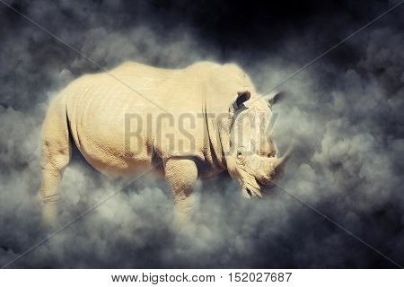 Rhino In Smoke