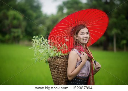 Beautiful Asian Woman Farmer With Red Umbrella In Rice Farm. Agriculture Organic Small Business Farm