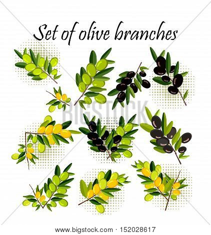 vector illustration set of olive branches on a white background