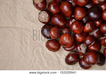 Chestnuts Autumn Background Fall Retro Photo 7
