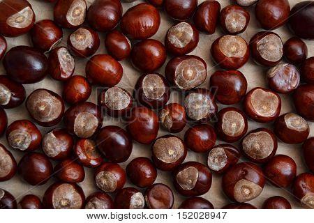 Chestnuts Autumn Background Fall Season Retro Photo 1