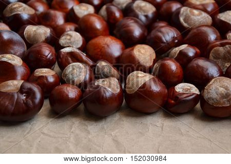 Chestnuts Autumn Background Fall Season Retro Photo 5