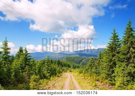 road with pine trees in the mountains. Landscape with a dirt road in the mountains with pine trees. Carpathian mountains. Beautiful sunny day is in mountain landscape. Mountain trail
