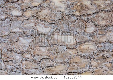 Tree bark texture and background,closeup tree bark.