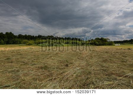 Just mowed meadow before rainfall in summer, Bialowieza Forest, Poland, Europe