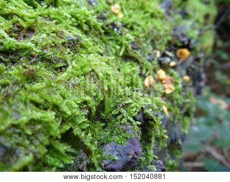 Fungi And Moss On A Rotten Wood