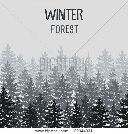 Wild Coniferous Forest Background. Pine Tree, Landscape Nature, Wood Natural Panorama.