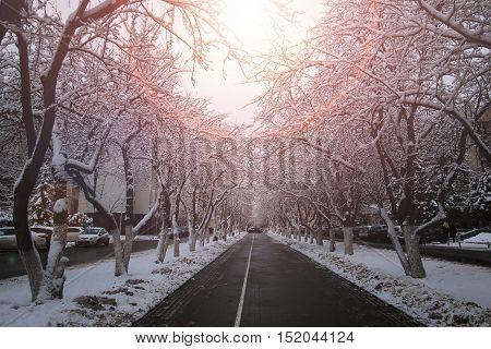 pedestrian way tree in winter park outdoor