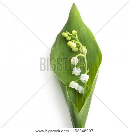 Lily of the valley, isolated on white.