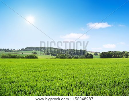 Idyllic landscape with crop field and bright sun. Agriculture landscape with sunbeam and blue sky.