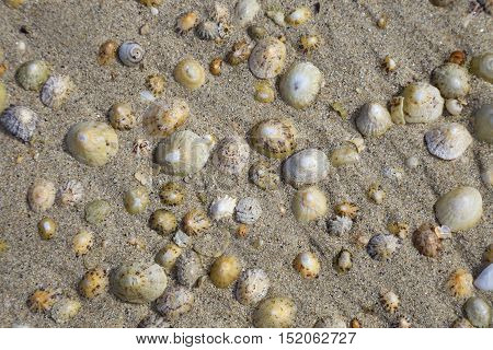 Limpets on sandy beach, Isles of Scilly, Cornwall, England