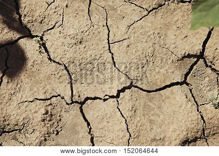 Dry cracked earth and green leaf
