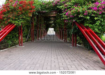 Green Flowering Tunnel