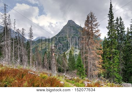 Mountain peak in beautiful summer forest scenery.