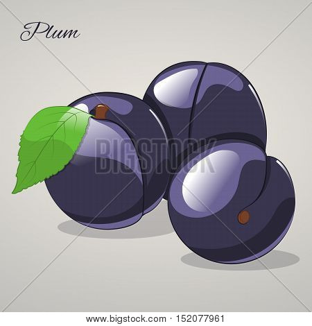 Cartoon sweet plum isolated on grey background, vector illustration. Fruits and vegetables collection.