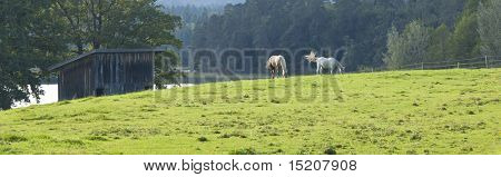 An image of two horses eating grass