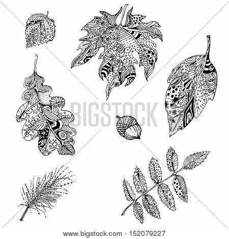 hand drawn black and white doodle leaves of mountain ash oak apple tree pine branch .