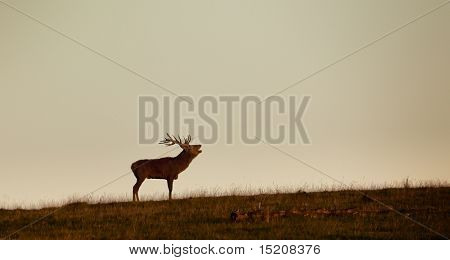 An image of a nice deer in the evening light