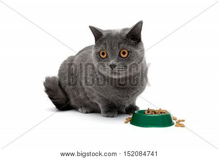 gray cat sits beside a bowl of food. horizontal photo.