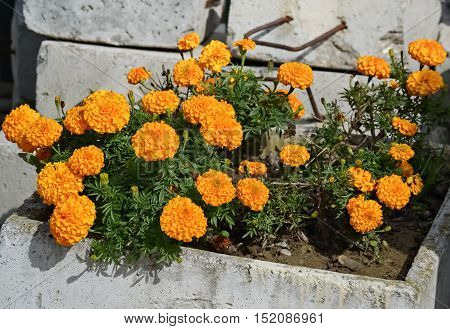 Decorative orange flower in a pot on the street