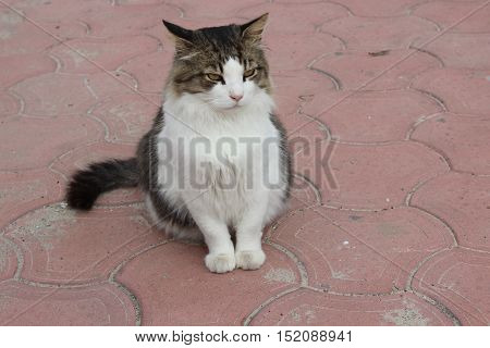 Beautiful stray cat sitting on the road