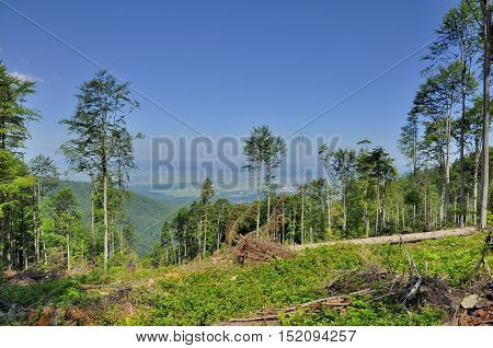 Forest cut down in Romanian Carpathians mountains