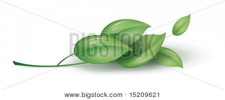 An image of a nice green plant