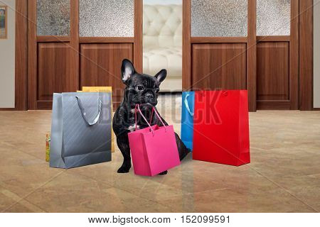 Cute dog holding in teeth a bag for purchases. Many multi-colored bags around the dog on the floor. The concept of the sale purchase pet products
