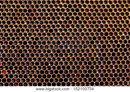 fresh honey in cells. dark honeycomb natural background