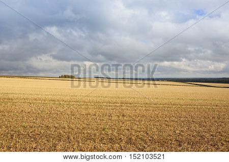 rolling hills with straw stubble overlooking the vale of york under a blue cloudy sky in autumn in the yorkshire wolds