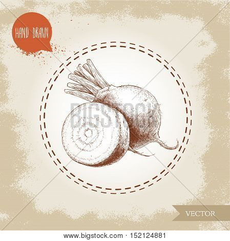 Hand drawn beet root with sliced root. Sketch vintage vector illustration.
