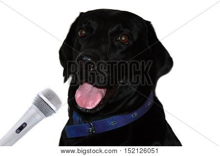 A metaphorical image of a black labrador aspiring to be a singer and radio jockey.