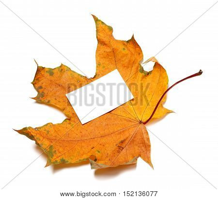 Autumn Dried Maple-leaf With White Empty Price Card