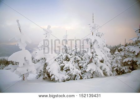 Trees covered with hoarfrost and snow  in winter mountains - Christmas background