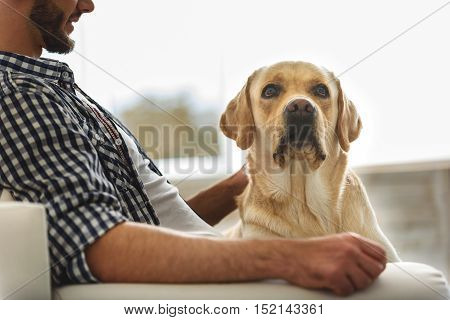 serious dog sitting on his owner at home